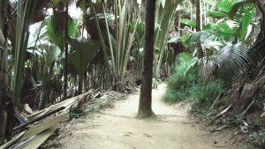 Eine Ansicht in den tropischer Wald.